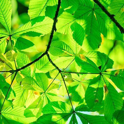 Экологический фестиваль «Сохраним природу»